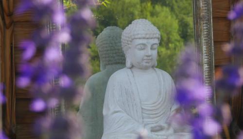 Bouddha fleurs violettes