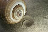 spirale coquillage